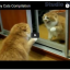 Funny Cats Compilation from Reddit