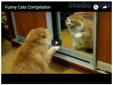 Reddit Funny Cats Compilation